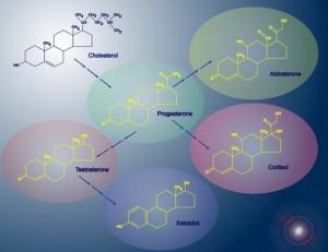 Hormone pathway