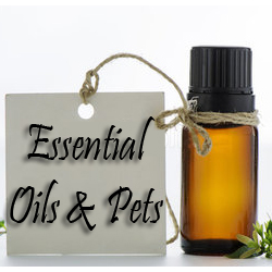 essential-oils-and-pets
