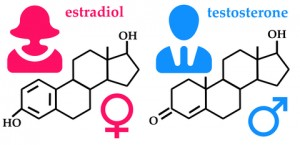 Estrogen and Testosterone