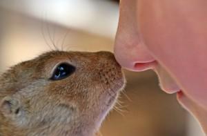 nuzzle-nose