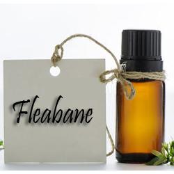 Fleabane